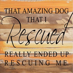 That Amazing Dog... 12x12 Reclaimed Wood Wall Art