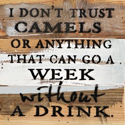I Don't Trust Camels 8x8 Reclaimed Wood Wall Art